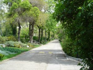 Typical pathway in the Gulhak compound, 2005.