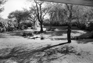 The stream, 1961.