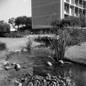 Stream, as it nears Antrim House, 1961.